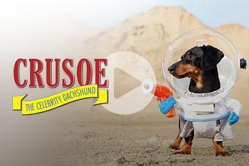 On location with Crusoe the Dachshund